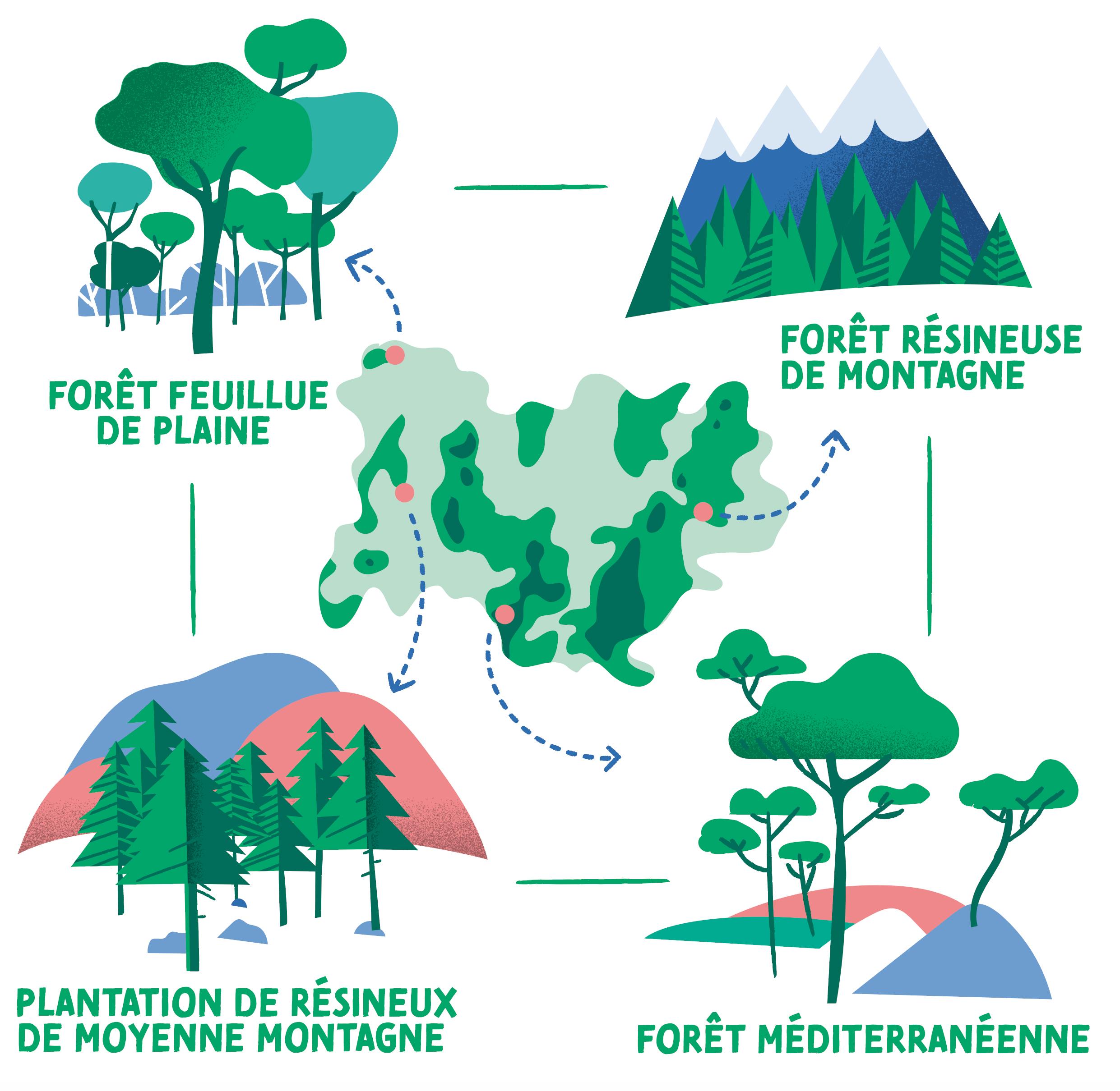 DRAAF_Region-Auvergne-Rhone-Alpes-Exposition-design-information-balade-foret-schema
