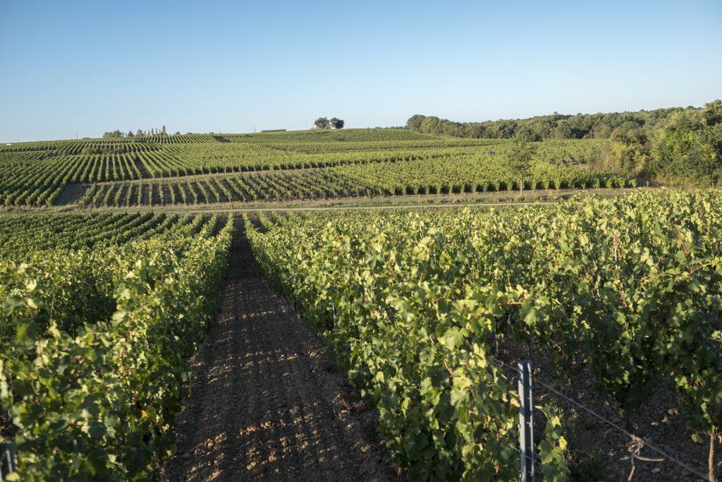 Domaine des Hardières - Vin blanc
